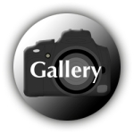 Gallery_icon copy